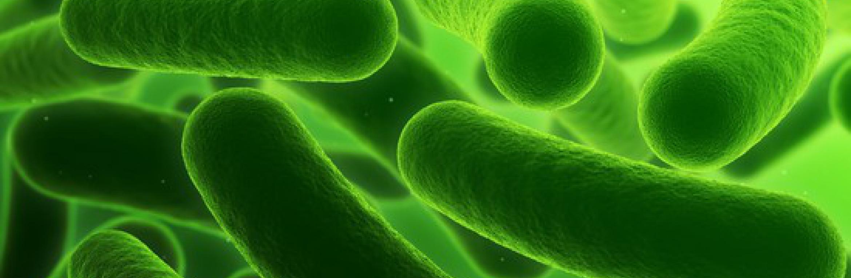 Les maladies bactériennes